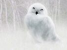 Snowy Owlet by Elaine  Manley