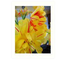 Stripy Tulips Art Print