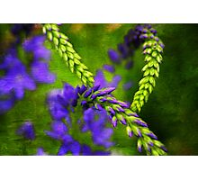 Graphic Flora Photographic Print