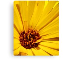 Striking Yellow Canvas Print