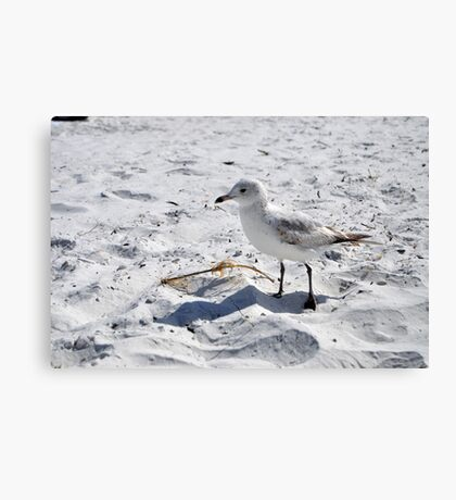 "Floridian Seagull ""Fort Myers Beach, Florida"" Canvas Print"