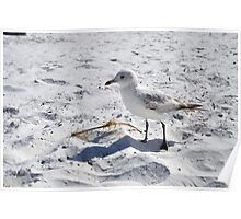 """Floridian Seagull """"Fort Myers Beach, Florida"""" Poster"""