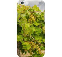 Abundant Harvest iPhone Case/Skin
