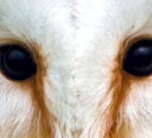 Barn Owl head Sticker