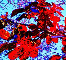 Blue Skies & Red Leaves - Garden Plant Life by Victoria limerick
