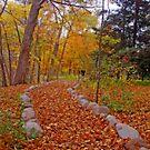 Autumn Nature Walk by kkphoto1