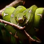 Green, but not with envy by Ashley Stevens
