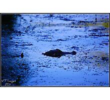 Blue Gator Photographic Print