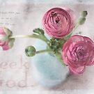 Pink Ranunculus by JulieLegg
