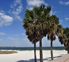"Beach near the Pier ""St. Petersburg, Florida"" by Hasiguntia"
