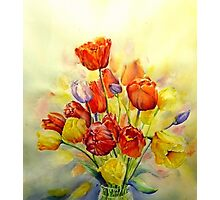 Tulip ,A spring Celebration ! Photographic Print