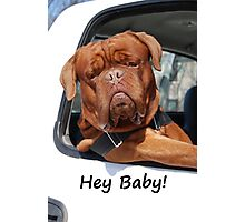 Greeting Card Dog Leaning Out of Car Photographic Print