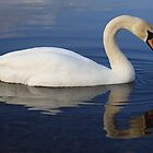 Killaloe Lake Swan  by Alfredo Encallado