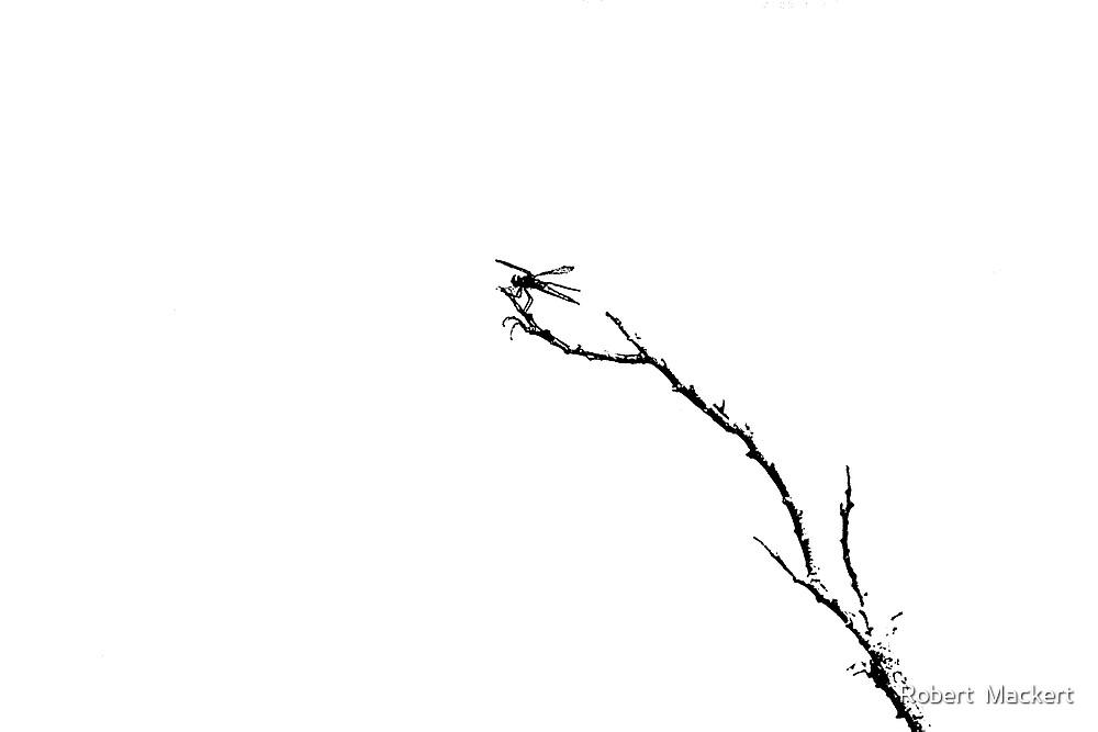 Dragon On A Stick by Robert  Mackert