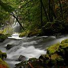 Panther Creek Falls Landscape by Nick Boren