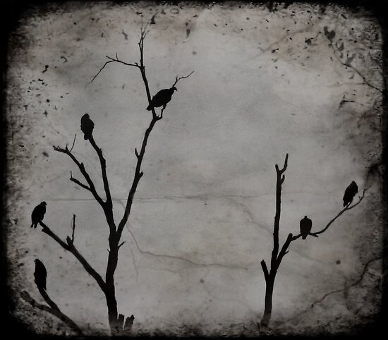 Black Birds by luckylarue