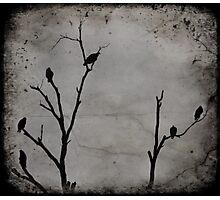 Black Birds Photographic Print