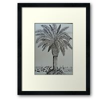 Palm Tree at the wedge Framed Print