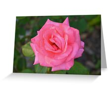 Pink rose with diamond-dust dew Greeting Card