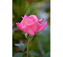 Portrait of a pink rosebud Photographic Print