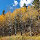 Golden Aspen by BCkat