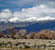 Eastern Sierra Nevada Mtns  by Donna Anglin Husband