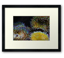 Underwater Garden Framed Print