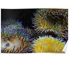 Underwater Garden Poster