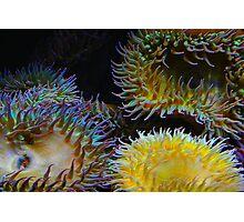 Underwater Garden Photographic Print