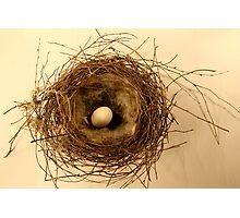 Thrush's nest Photographic Print