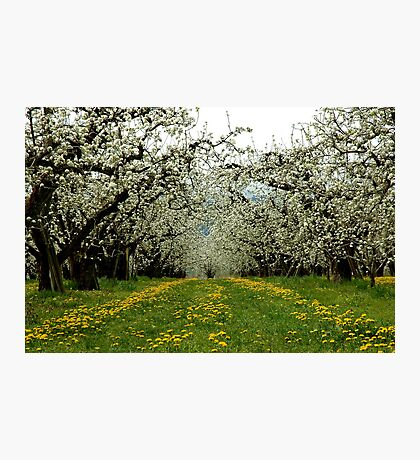 Hood River Blossom Landscape Photographic Print