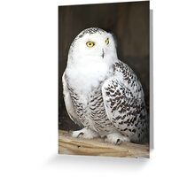 My piercing yellow eyes Greeting Card