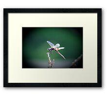Dragons Fly Framed Print