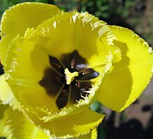 Ready for the Ball - Yellow Frilled Tulip by BlueMoonRose