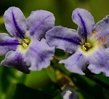 Duranta Flower in Macro by Ranbir Singh