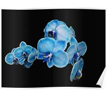 My Blue Orchid Poster