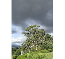 vista at Rosevears Vineyard   Photographic Print