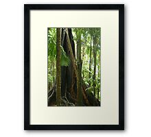 Old growth tree Framed Print