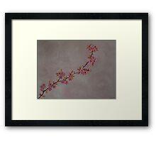 Blossoms in the rain Framed Print