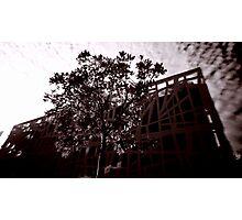 Nature Vs Architecture Photographic Print