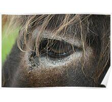 Donkey Eye Poster