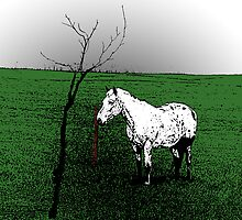 Lone White Appaloosa Horse by Andrielle