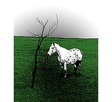 Lone White Appaloosa Horse Photographic Print