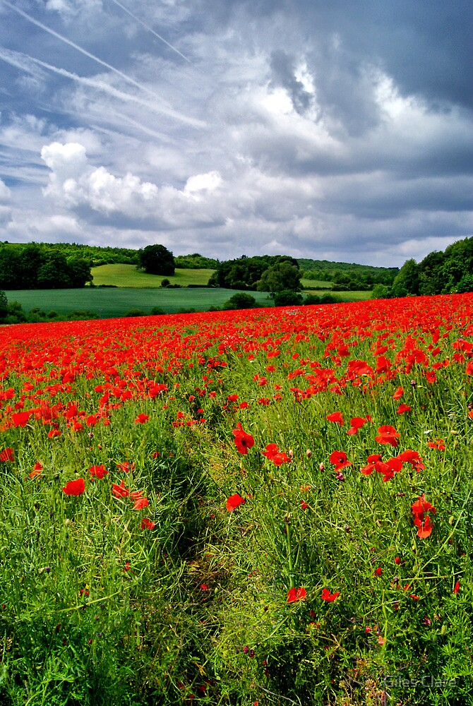 Poppy Field, The Cotswolds, England by Giles Clare