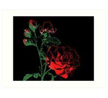 Roses - Bud to Bloom Art Print
