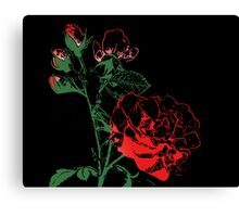 Roses - Bud to Bloom Canvas Print