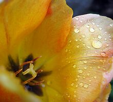 Yellow Tulip With Rain Drops by Janice Dunbar