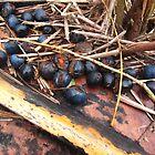 Berries on a boat by klarutshka