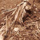 Fallen Tree by klarutshka