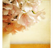 Be My Cherry Blossom Photographic Print